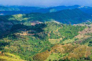 Perennial Agriculture Landscape