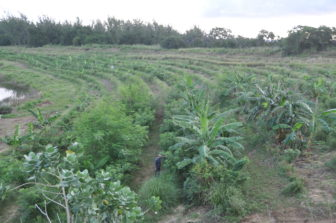 Walkers Quarry Regenerative Agroforestry