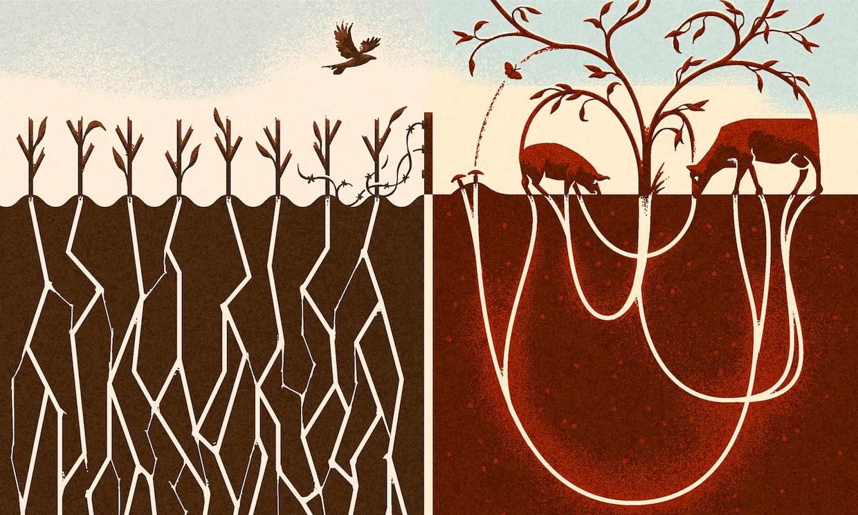 Regenerative Grazing vs. Monoculture Corn - Illustration by Matt Kenyon