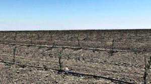 California Almonds and Regenerative Agriculture?
