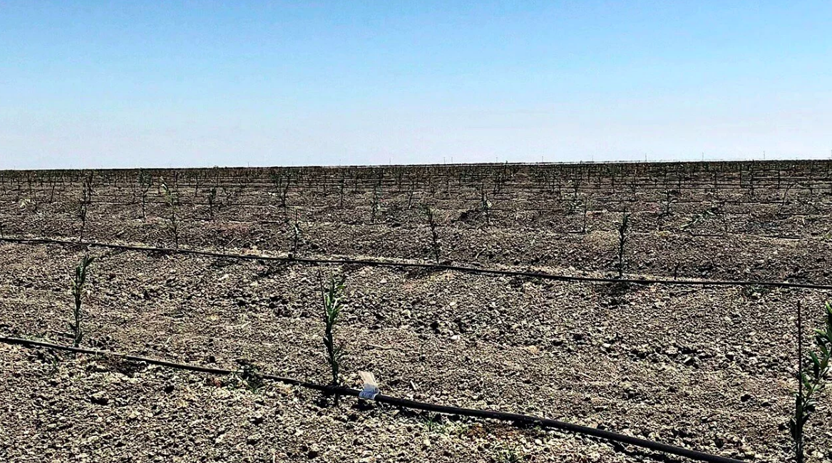 California Almonds and Regenerative Agriculture?