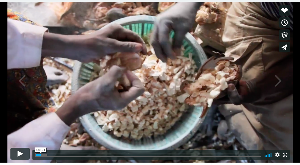 Kaibae - Lost Crops Documentary
