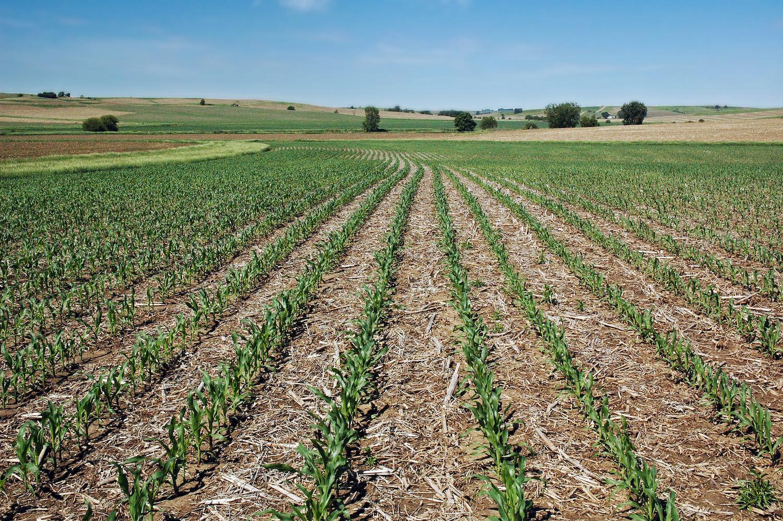 Regeneration Newsroom Corn Soy No Till